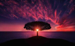 Se connecter à soi et trouver sens à sa vie avec l'Arbre de Vie